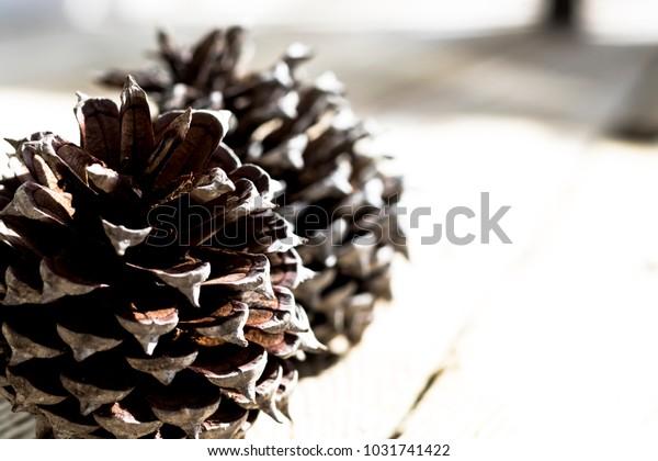 Open Pine Cones on Display