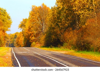 Open road in the autumn wood