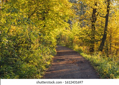open road in forest in autumn with sunlight