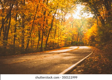 Open Road Through Autumn Leaves