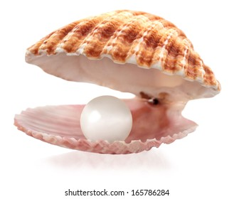 An open seashell with a pearl isolated on white