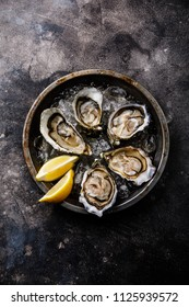 Open shucked fresh Oysters with lemon on ice on dark background copy space