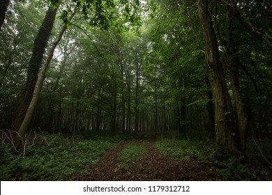 An open spot at the dark woods of the French Ardennes.