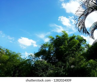 Open view beautiful trees on sky background through green trees sun light day time. town park sky view. Daintree rainforest cloudy photos Is fresh air, looks lively, shady. Horizontal image.