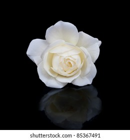 open white rose button with reflection isolated on black background