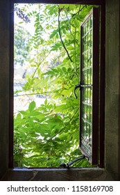 Open window of opportunity. Period country house leaded window opening onto the lush foliage  of a summer garden. Positive future outlook and freedom from a bleak interior.