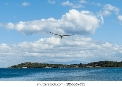 Open wing seagull flying solo under blue sky with white clouds towards quarantine island in Cesmealti, Urla, Izmir.