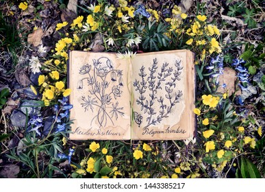 Open witch diary book with drawings of healing plants. Wicca, esoteric, divination and occult concept with magic objects for mystic rituals, Halloween, Beltane background
