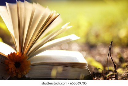 opened book in yellow autumn