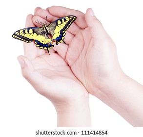 Opened child's  hands holding a colorful butterfly isolated on white
