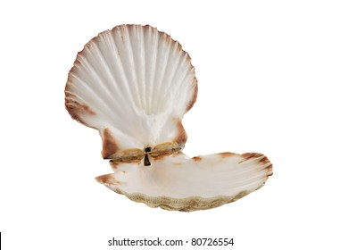Opened empty scallop shell isolated on white background