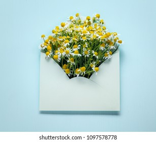 Opened envelop with chamomile flower