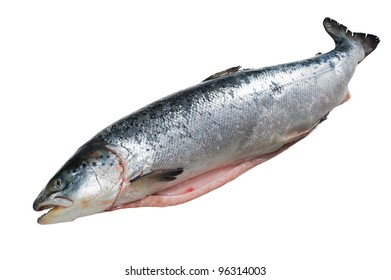 Opened grown salmon and white isolated background.