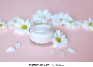 Opened jar with chamomile face cream or body cream with chamomile flowers on pink background. Macro cream with chamomile flowers and flower petals