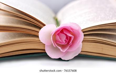opened old book and rose