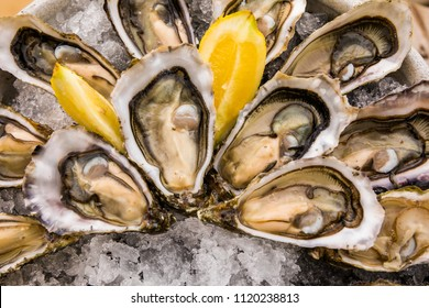 Opened Oysters on metal plate with ice and lemon.