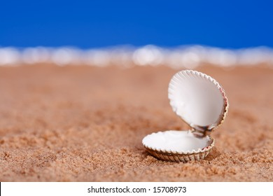 opened sea shell on beach sand and blue sky background, shallow DOF