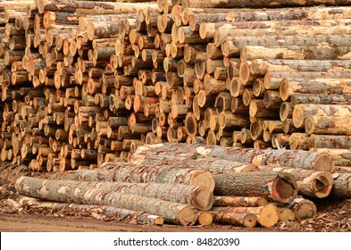 Operations in the log yard at a conifer log mill near Roseburg Oregon