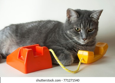 Operators are waiting for your call. Cute grey cat talking on toy vintage phone or waiting patiently for a customer to call. Cat customer service concept or kittens running telecommunication empires.