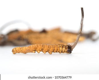 Ophiocordyceps sinensis (CHONG CAO, DONG CHONG XIA CAO) or mushroom cordyceps this is a herbs on isolated background. Medicinal properties in the treatment of diseases. National organic medicine.