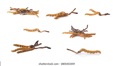 Ophiocordyceps sinensis (CHONG CAO, DONG CHONG XIA CAO) or mushroom cordyceps this is a herbs on white background