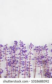 Ophiopogon flower purple flower lace