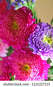 Opulent bright pink and violet yellow-centered aster flowerheads close up. Selected focus. Floral background.