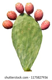 Opuntia cactus (prickly pears) with red edible fruits isolated on a white background. Sabra Fruit