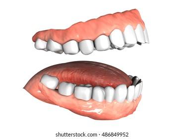 oral 3D illustration
