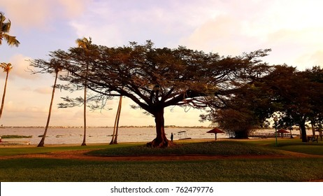 oran tree sunset abidjan cote d ivoire