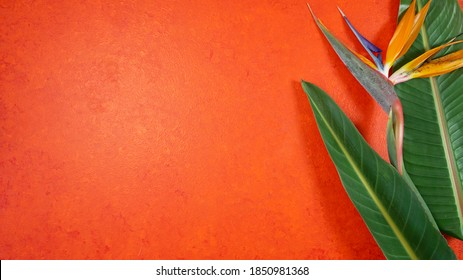 Orange aesthetic tropical theme minimilism creative layout stylish background with bird of paradise flowers and leaves on an orange textured background with negative copy space.