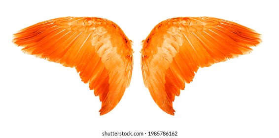 Orange Angel wings an isolated on white background