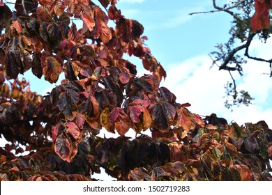 Orange Autumn Beech Tree Leaves Close Up Abstract