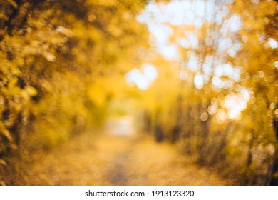 Orange autumn bokeh background from nature forest out of focus.Blured,design element. Defocused natural yellow tree background with sun beams.