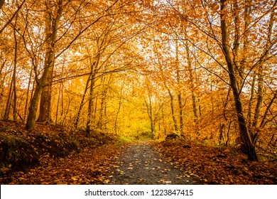 Orange autumn colors in the forest with a nature trail in the fall