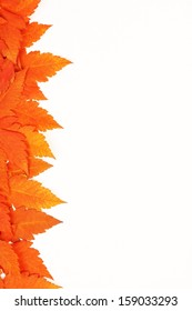 Orange autumn fallen leaves on white background - vertical Colorful leaves