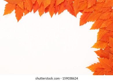 Orange autumn fallen leaves on white background - frame