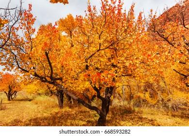 Orange autumn garden
