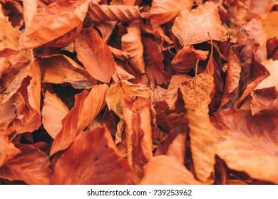 Orange autumn leaves.