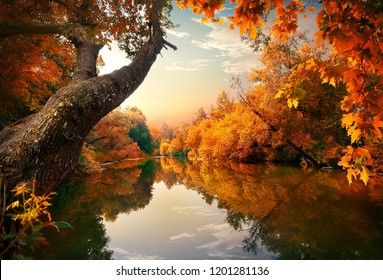 Orange autumn on river in the forest