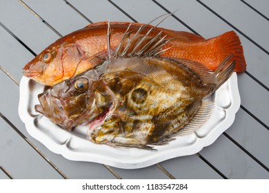Orange ballan wrasse and brown St Pierre on a pewter dish after fishing in Brittany