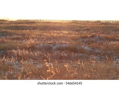 orange beach gulf shores alabama sunset on beach behind sea oats and grass