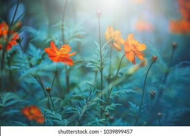 Orange beautiful flowers on dark blue green background. Summer