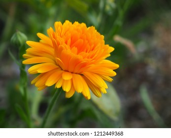 Orange beautiful macro flower, photo background