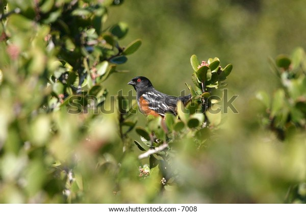 orange and black bird perched in the branches of a succulent tree