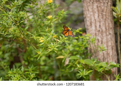 Orange and black butterfly flying.