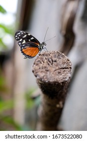 Orange and black butterfly on a branch