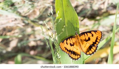 Bộ sưu tập cánh vẩy 4 - Page 9 Orange-black-butterfly-resting-on-260nw-1061888390