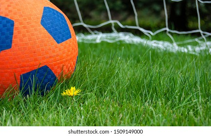 orange and blue soccer ball in grass with dandelion and sports net in background