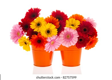 Orange buckets with bouquets of Gerber flowers isolated over white background